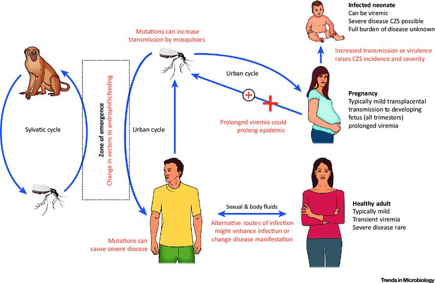 Как передается туберкулез наследство